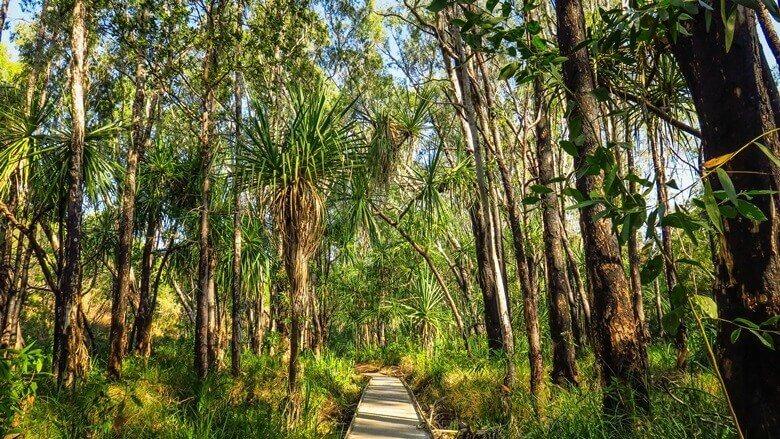 Wanderweg im Kakadu National Park in Australien