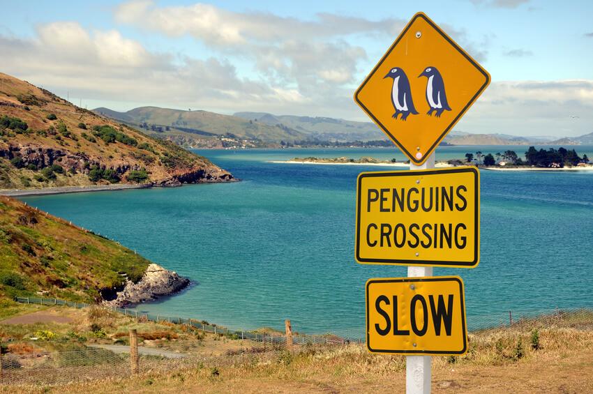 Panneau Penguins dans la pninsule de l'Otago - New Zealand