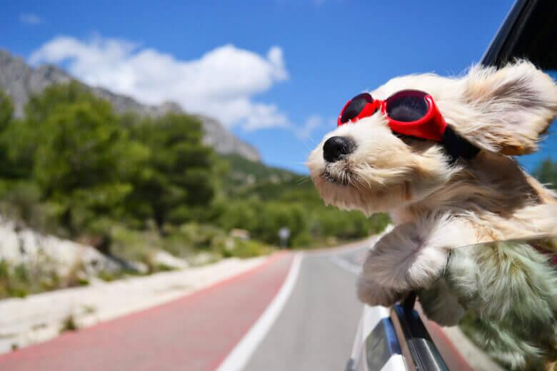 Hund im Fahrzeug
