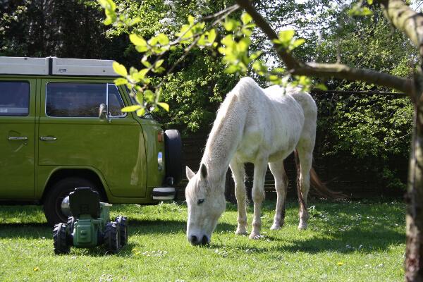 Pferd neben einem Wohnmobil