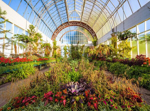 Wintergarten-Gewächshaus in Auckland Domain