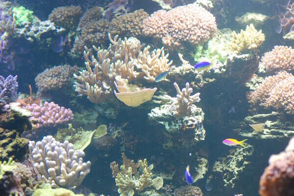 Becken mit Korallen im Vancouver Aquarium