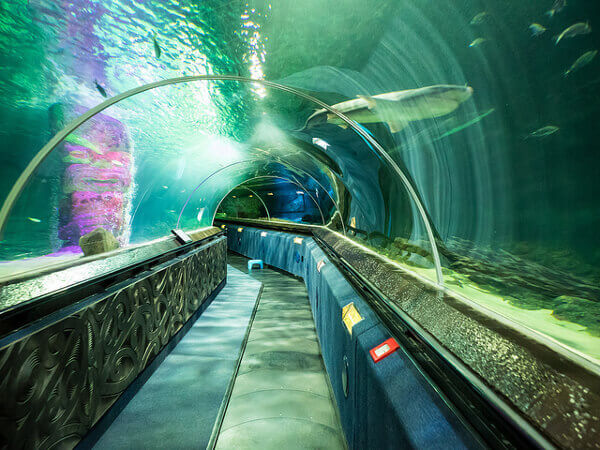Kelly Tarlton's Sea Life Aquarium Glastunnel