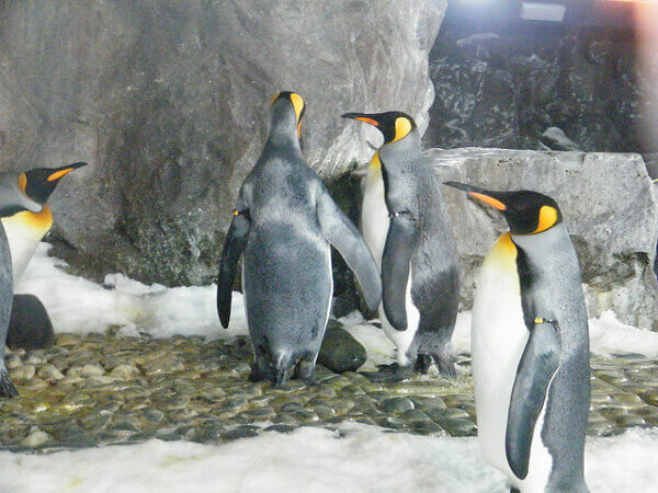 Pinguine in Kelly Tarlton's Sea Life Aquarium