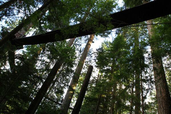 Treetop Adventures im Capilano Suspension Bridge, Vancouver