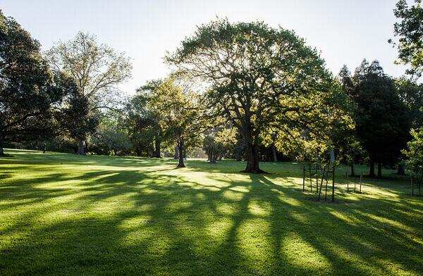 Auckland Domain Grünflächen