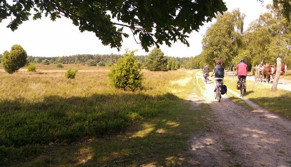 Wunderschöne Landschaft der Lüneburger Heide
