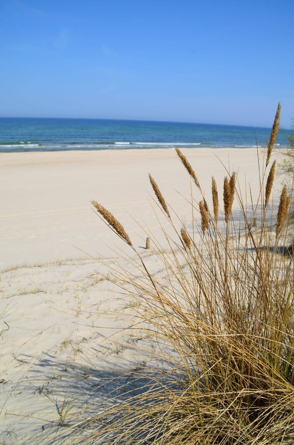 Trassenheider Strand