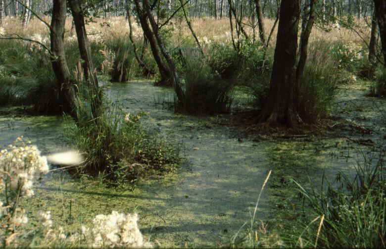 Baum- und Wasserlandschaft im Müritz-Nationalpark
