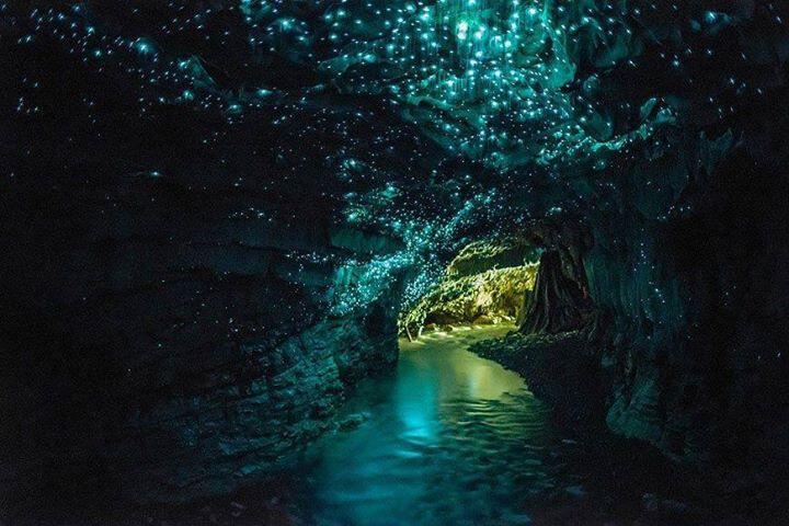 Glowworm-Höhlendecke Waitomo