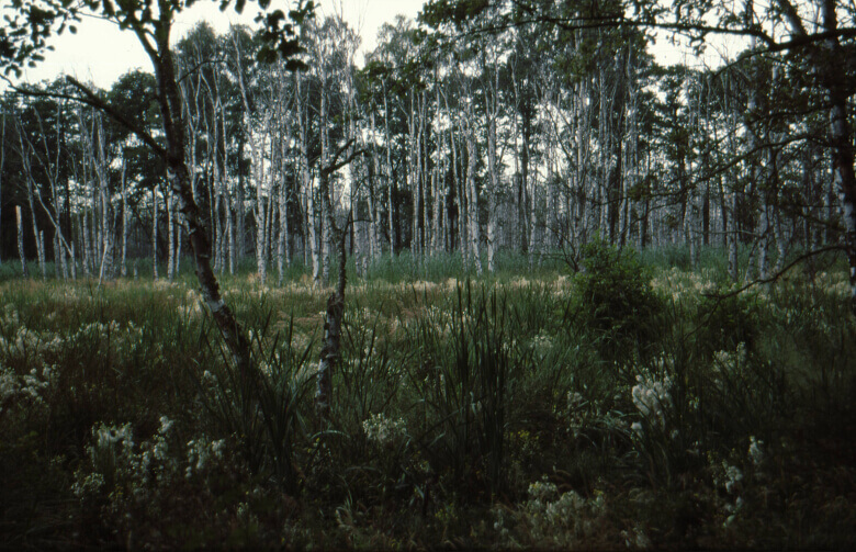 Wald im Müritz-Nationalpark