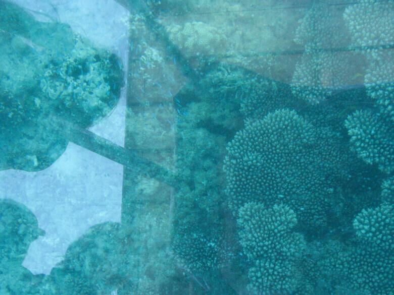 Ningaloo Reef vom Glasboot aus