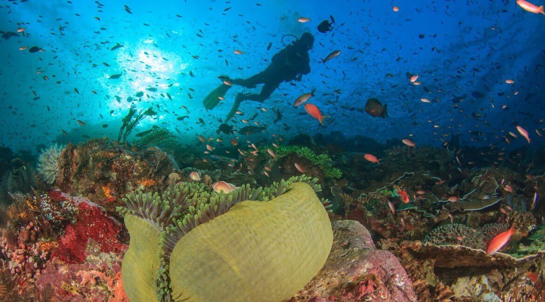 Taucher im Ningaloo Reef