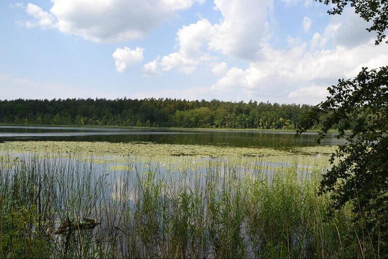 Einer von vielen Seen im Müritz-Nationalpark