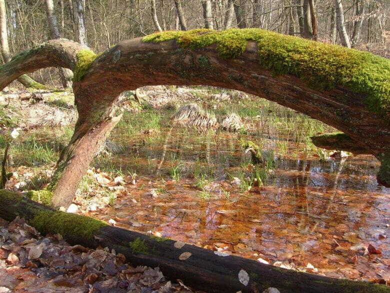 Nasser Waldboden im Müritz-Nationalpark