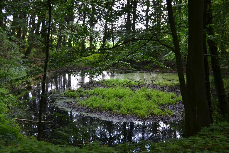 Müritz-Nationalpark Tümpel und Moore
