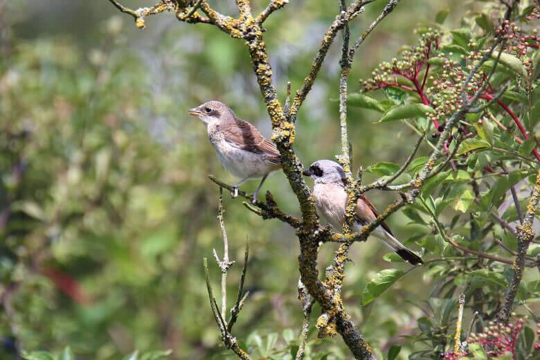 Müritz-Nationalpark Vogelbeobachtung