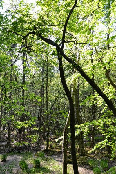 Müritz-Nationalpark - Waldabschnitt