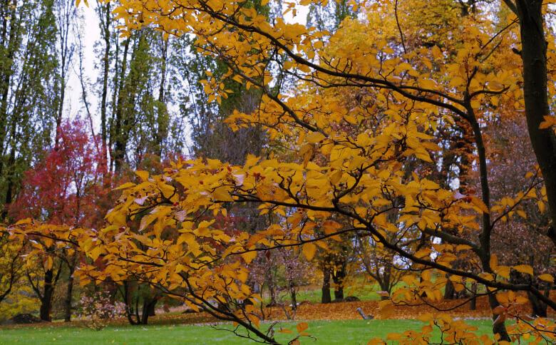 Bäume in herbstlichen Farben in Oslo