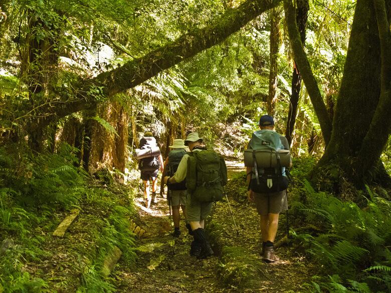Wanderung durch den Whirinaki Forest Park