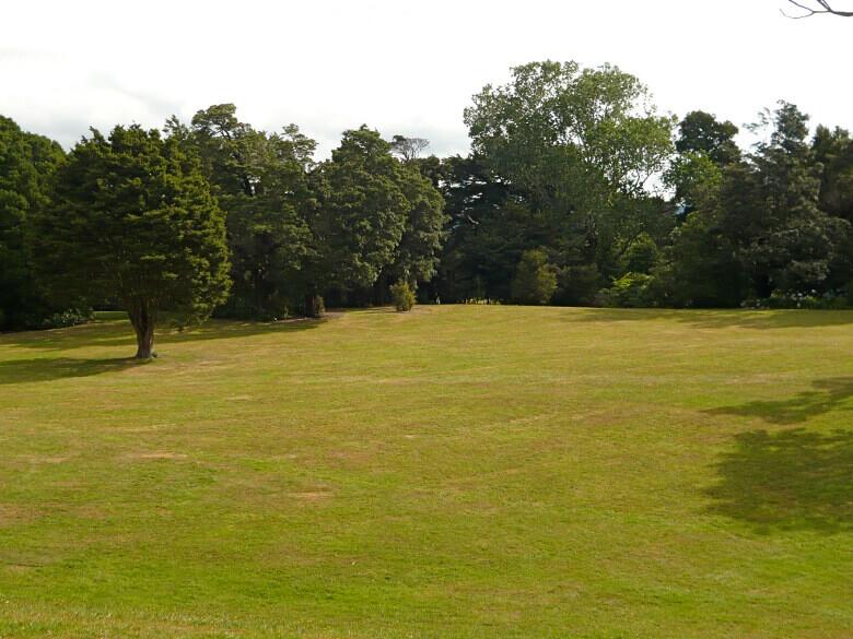 Wiese und Bäume im Harcourt Park