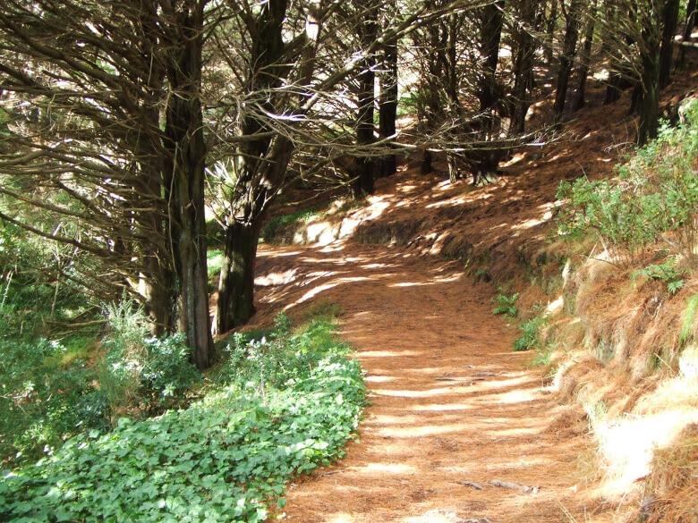 Waldweg im Mount Victoria Park