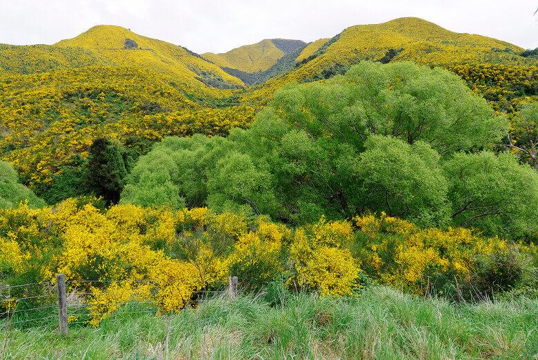 Blühende Felder und Bäume in Neuseeland