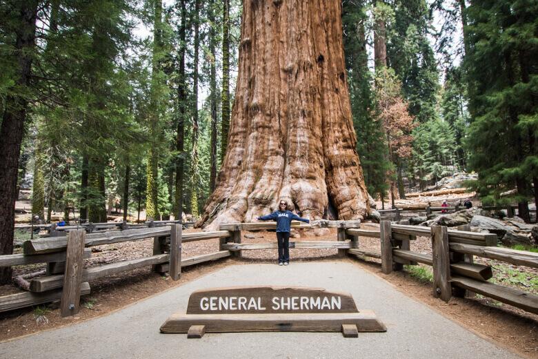 Mädchen vor dem General Sherman Tree