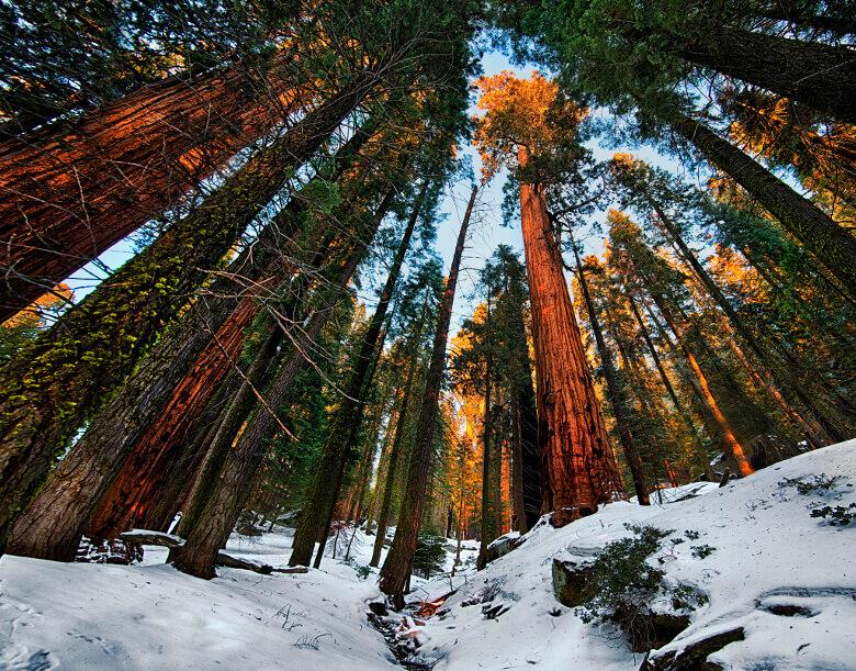 Sequoia National Park mit herbstlichem Schnee