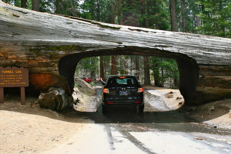 Durchfahrbarer Mammutbaum Tunnel Log