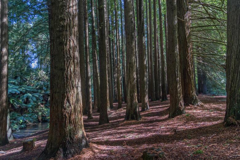 Wanderpfad im Great Otway National Park