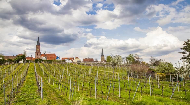 Deutsche Weinstraße mit Weinfeldern