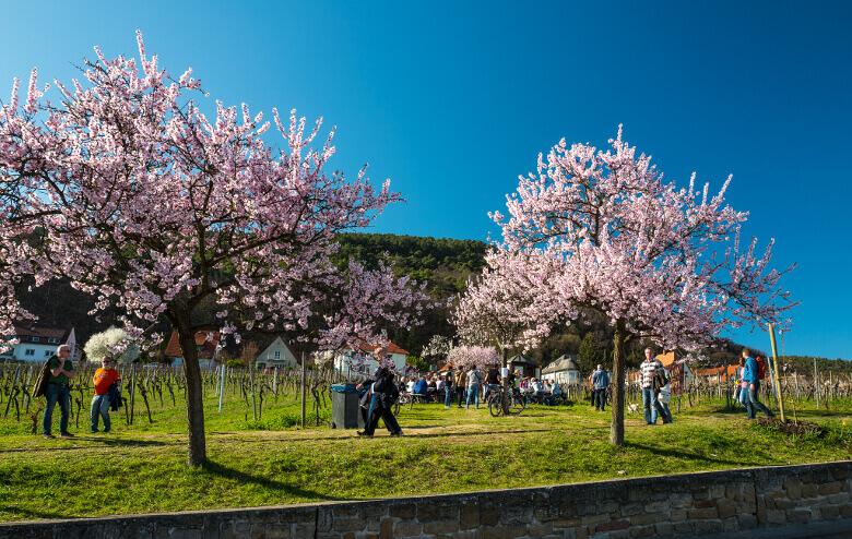 Das Mandelblütenfest 2017 in Gimmeldingen
