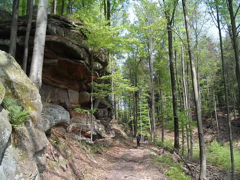 Wanderweg im Pfälzerwald
