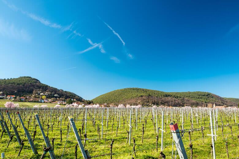 Pfälzer Weinfelder
