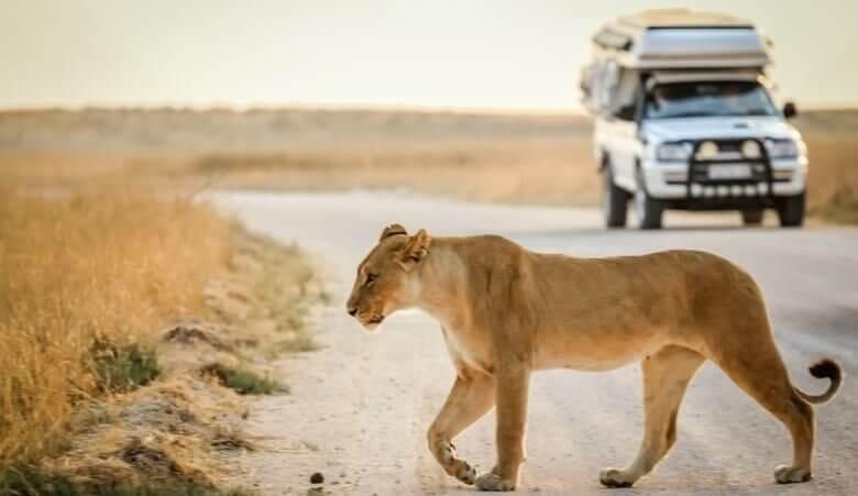 Wohnmobil-Safari in Namibia