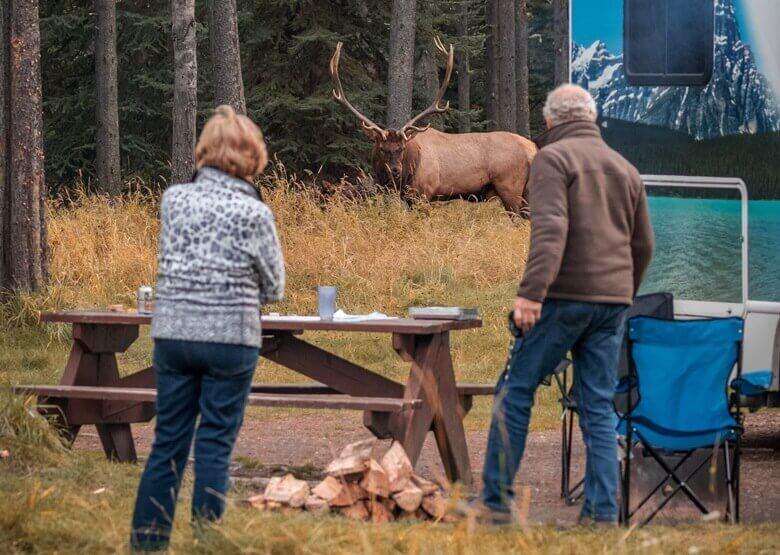 Zwei Camper beobachten einen Wapiti im Jasper National Park in Kanada