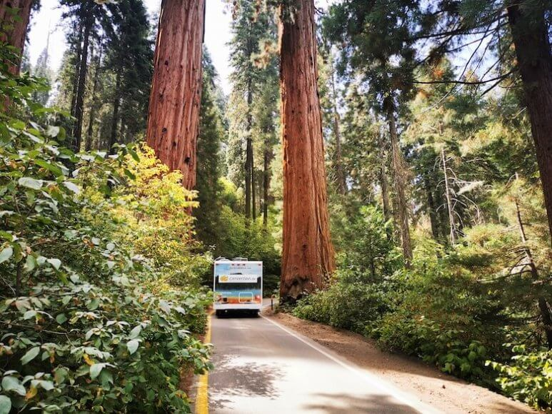 Sequoia National Park mit dem Wohnmobil