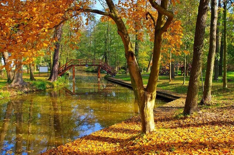 Herbstliche Landschaft am Naturhafen Raddusch im Spreewald