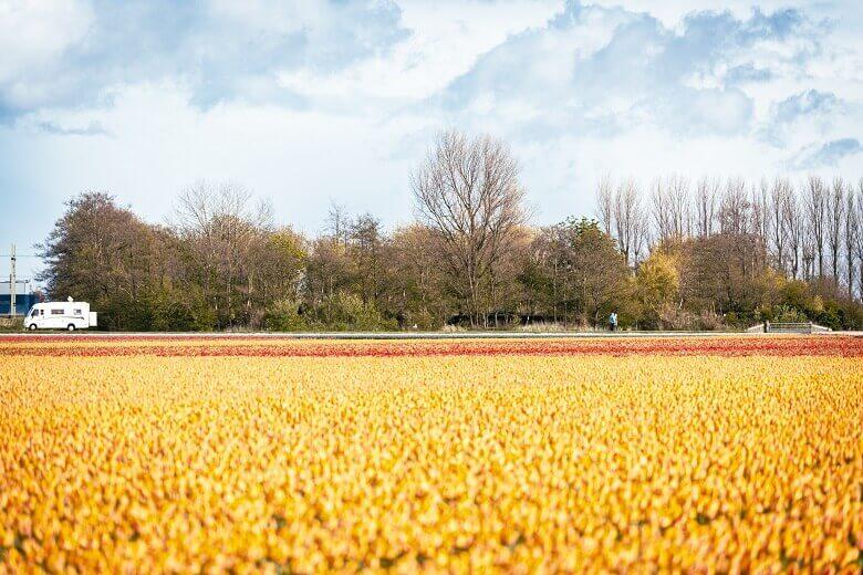 Wohnmobil und Tulpenfelder in den Niederlanden