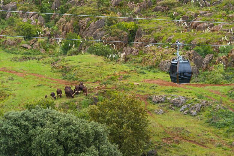 Blick auf die Tiere im Wildpark Cabárceno und die Seilbahn